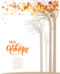 Autumn trees banner