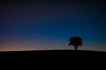 Einsamer Baum im Sternenhimmel