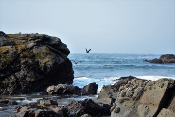 Ocean  Rocks With Birds