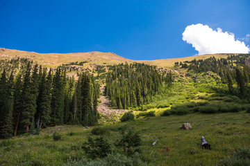 Mountain range landscape with blue sky pine trees valley. Colorado. USA