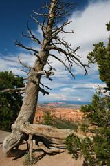 tree, nature, landscape, sky, free, rocks, forest, pine,