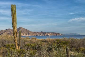 Desierto de Baja California Sur, en Bahia de Muertos, Sea of Cortes, La Paz. MEXICO