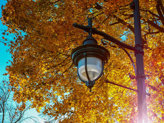 looking up at a black ornate lamppost in front of a canopy of bright yellow oak leaves in fall