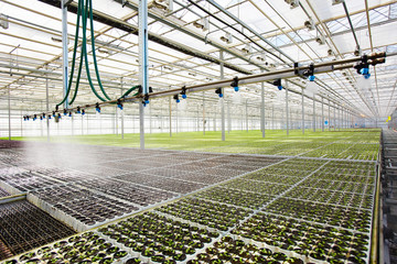 Modern system of irrigation in large hothouse at agricultural farm