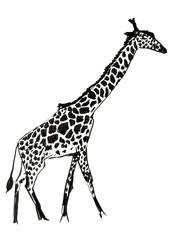 "Рисунок тушь кистью ""Жираф"""