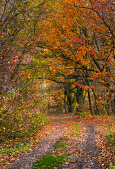 lovely autumnal scenery with dirt road in forest with reddish foliage