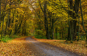 lovely autumnal scenery with asphalt road through forest in yellow foliage