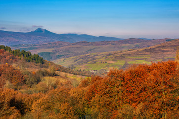 forest with red foliage on hills in autumnal countryside. stunning view of mountainous area with gorgeous high peak of blue mountain ridge in a distance