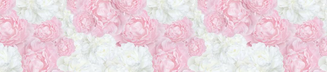Fototapeta pattern panorama trendy  pale pink  and white peonies