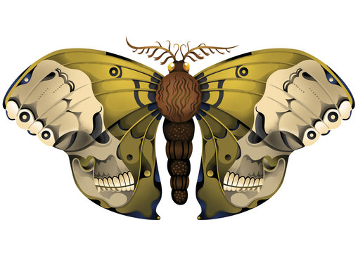 Moth Insect Illustration with Skull Wings