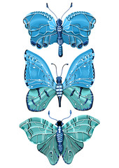 Insect Illustration with Three Butterflies