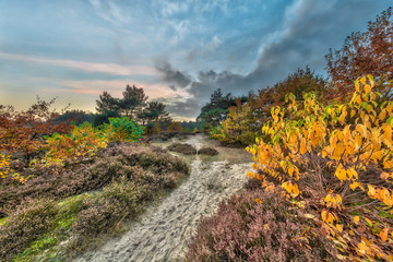 Autumn heathland landscape with yellow leaves