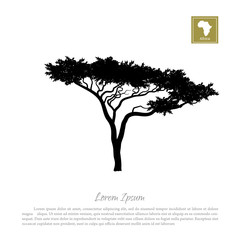 Black silhouette of a tree and white background. African nature. Umbrella acacia. Vector illustration