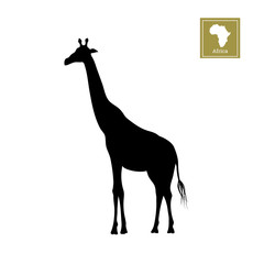 Black silhouette of a giraffe on a white background. Detailed drawing. African animals. Vector illustration