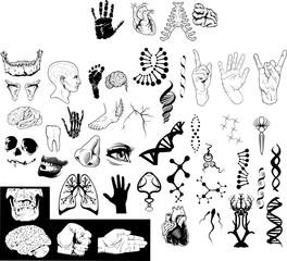 anatomy vector package set