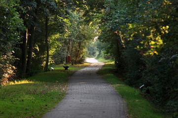 Waldweg auf Borkum