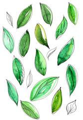 Зеленые листья на белом фоне, акварель