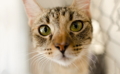 Cat Tabby Eyes