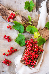 The leaves and berries of red currant on piece of old wood. Top view