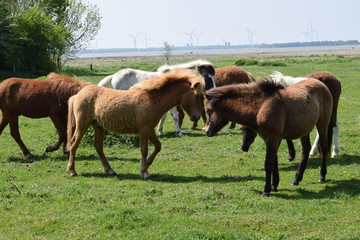 Horses in a field of grass