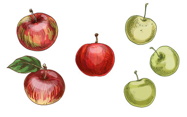 Illustration with different apples, red and green isolated on white background. Vector