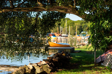 Overhanging tree branch with fine reflections from the water below. Blurred background with visible boats and marina.