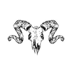 Beautiful goat skull. Drawn by hand. Dark gothic illustration. It can be used for printing on t-shirts, postcards, or used as ideas for tattoos.