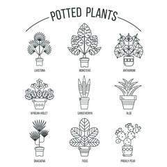 Flowers in pots. Potted plants. Set of vector line images. Isolated on white background.