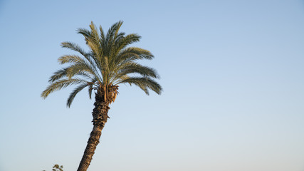 Off-center shot of palm tree extending in the sky.