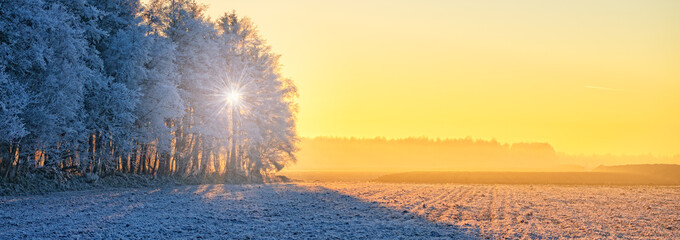 Photo sur Aluminium Jaune de seuffre Winter in East Frisia