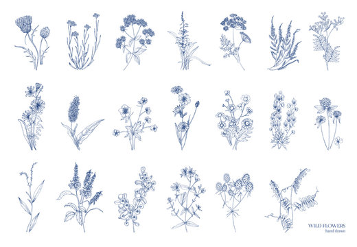 Big bundle of elegant wild herbs isolated on white background. Herbaceous flowering plants hand drawn by contour lines. Natural detailed vector illustration.