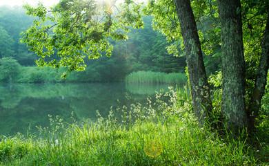 湖畔に射し込む朝陽に輝く緑葉