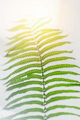 macro closeup green fern leaf tropical rainforest plant background.
