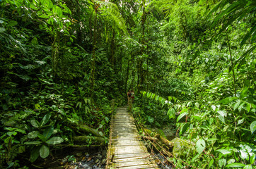 Beautiful wooden bridge in hill rain forest with moisture plant, located in Mindo