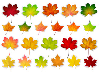 colorful set with autumn leaves, vector illustration