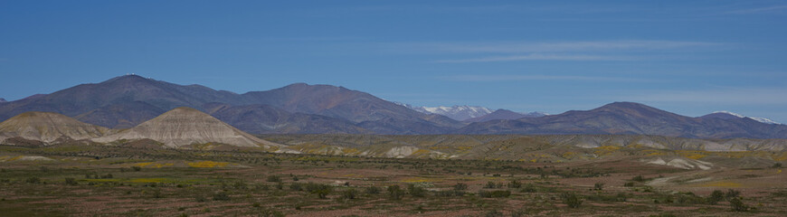 Landscape of the Atacama Desert along the Pan American Highway in Chile. Spring flowers resulting from unusual rain cover the surrounding area.