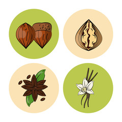 Herbs and spices icons over white background vector illustration graphic design
