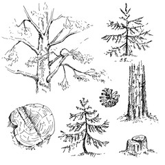 Hand drawn set of coniferous trees. Sketch, vector illustration.