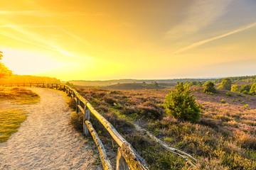 Foto op Plexiglas Zwavel geel Viewpoint from the Posbank with flowering Heather fields during beautiful Sunrise