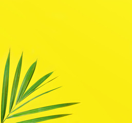 Palm Leaves on Yellow Background