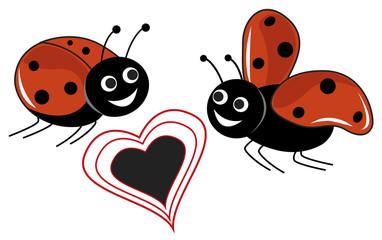 coccinella innamorata