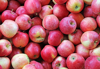 red apples ready to be eaten