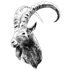 goat sketch vector graphics color monochrome black-and-white head