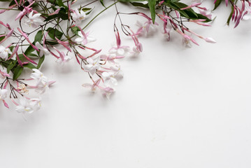 High angle view of jasmine flowers on white table with copy space - nature background (selective focus)