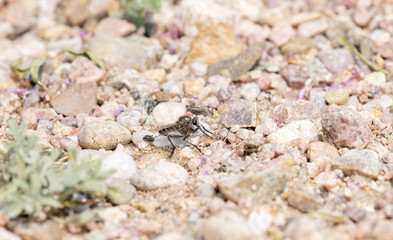 Robber Fly on Rocky Ground