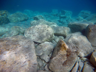 School of Baby Fish with Rocks and Corals in the Background