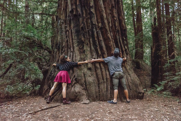 Friends hugging a giant tree