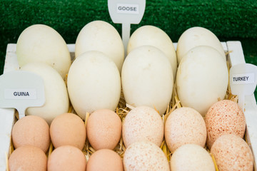 Labeled Raw Goose, Guina, and Duck Eggs