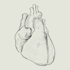 Abstract sketch of human heart
