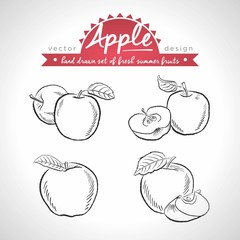 Apple. Set of fresh fruits, whole, half and bitten with leaf. Vector illustration. Isolated on white background